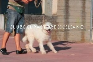 spino_021