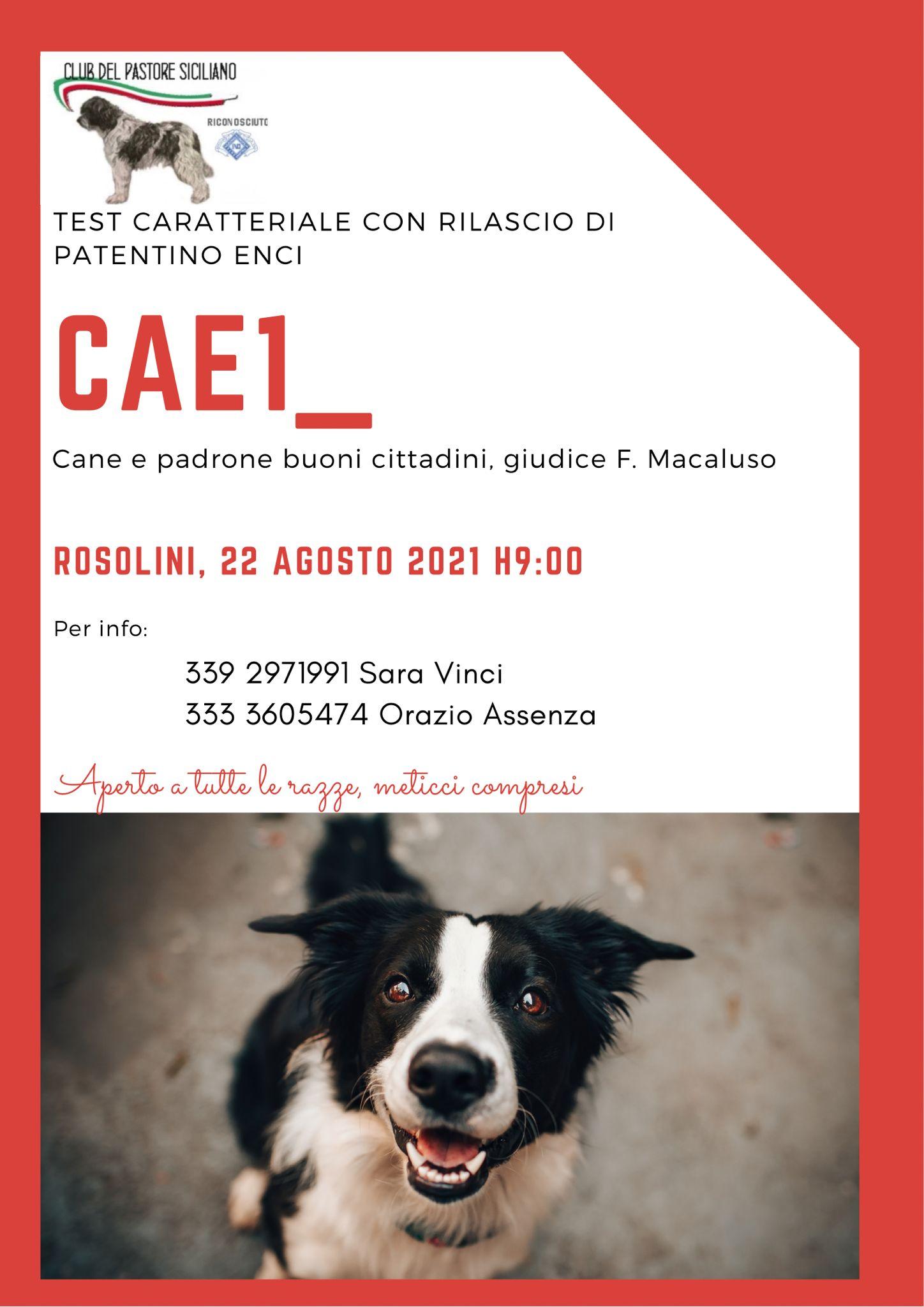 cae_rosolini